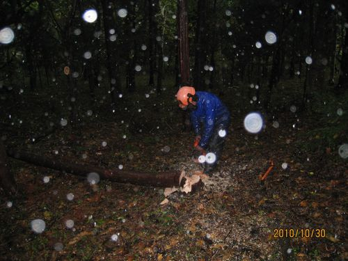 月齢伐採全国調査 20101030
